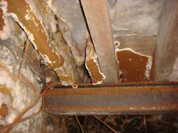 Dry Rot under a floor