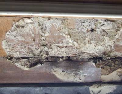 Dry rot Mycellium on wood - dirty, off white colour